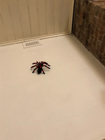pipe cleaner tarantula